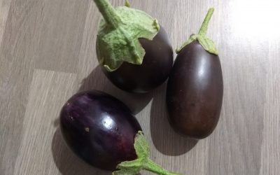 Aubergines from the Garden